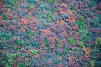 五彩的山坡植被