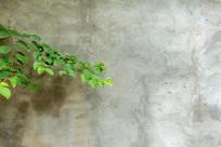 灰色背景墙下的绿色树叶