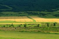 垦区农田风景