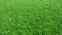 塑料草坪背景素材