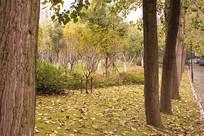 草地上落满叶子的园林