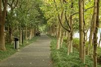 初秋的林荫道路