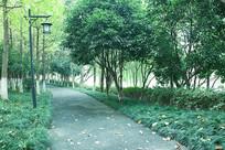 初秋的林荫道