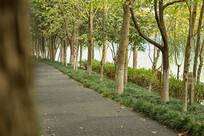 秋天的道路2