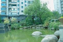 小区池塘边的柳树