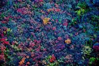 蓝色秋季背景