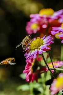 蜜蜂与鲜花