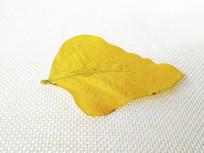 黄色叶片素材