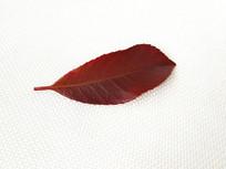 秋天红色叶