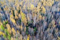 航拍秋季森林风光