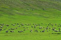 绿色山地牧场羊群