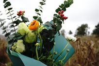 秋收后包谷地里的自由花束