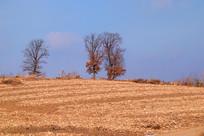 柞树乡村风光