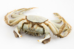 螃蟹大闸蟹腹面特写白背景图片