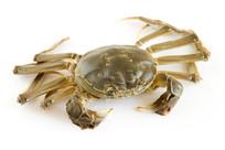 螃蟹大闸蟹正面特写白背景图片