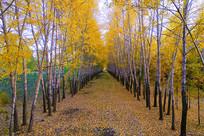 秋叶满地的林荫小道