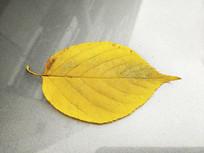一片嫩黄叶片