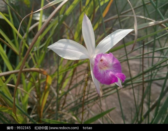 野生兰花观赏图片