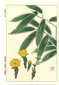 福寿草绘画