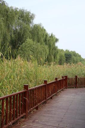 南海子公园木栈桥