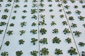 水培绿色蔬菜工厂