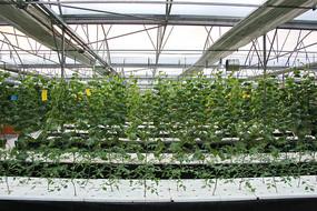 水培蔬菜绿色种植工厂