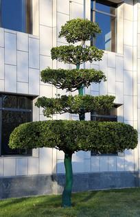 五级塔式绿树盆景