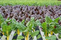 无土栽培绿色蔬菜工厂