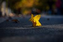 阳光下的金色树叶