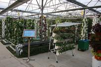 阳台农业水培蔬菜