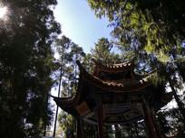 森林里的木质六角亭