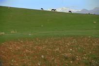 山坡上的马
