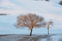 雪地里两棵树
