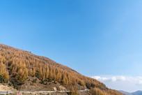 秋季山上的植被