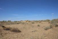 沙漠植物沙棘耐旱植物
