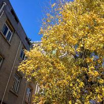 学校的秋季