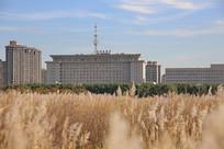 包头市政府前赛罕塔拉草原