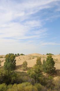 固沙植物骆驼刺沙漠荆棘