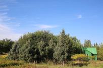 蓝天绿树小木屋