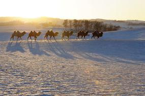 骆驼的影子