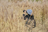 芦苇丛摄影