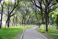 绿树成荫林荫道路