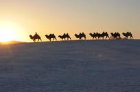 夕阳西下照骆驼