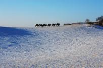 雪地驼队远景