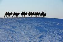 雪地驼队中景
