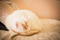 在睡觉的猫咪