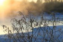 冰河冬天草叶朝阳