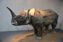 独角犀牛标本侧面