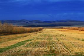 晚秋的农田