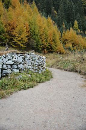 五彩森林山间小路
